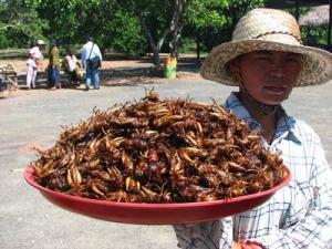 insectes_assiette